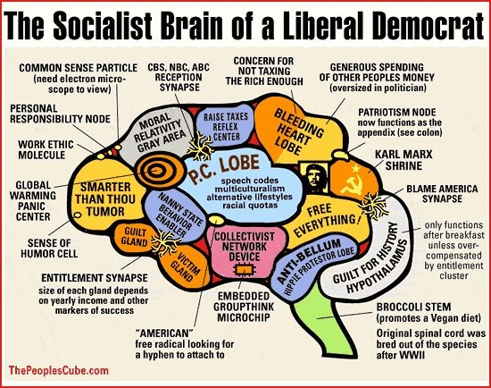 liberal brain